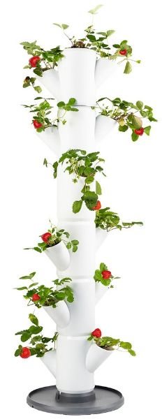 strawberry growing tower